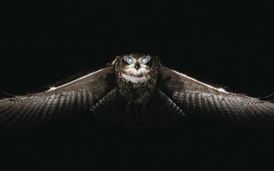 сова страшилка фото сон