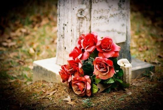 Роза с могилы мистическая история