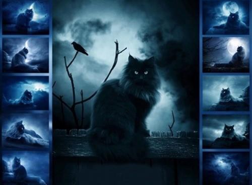страшные мистические кошки