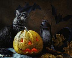 фото и картинки на Хэллоуин (26)