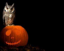 фото и картинки на Хэллоуин (62)