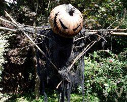 фото и картинки на Хэллоуин (82)