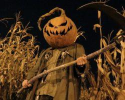 фото и картинки на Хэллоуин (89)