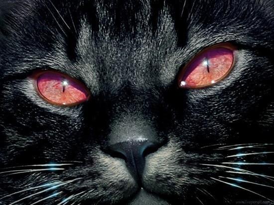 Коты убийцы картинка