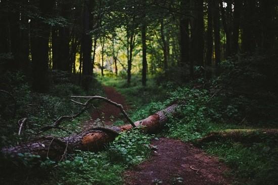 страшный лес картинка