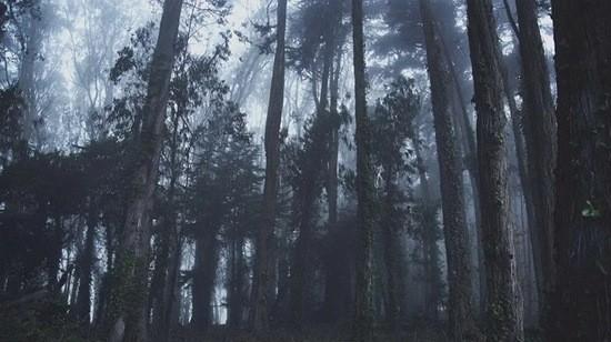 Чужой из леса