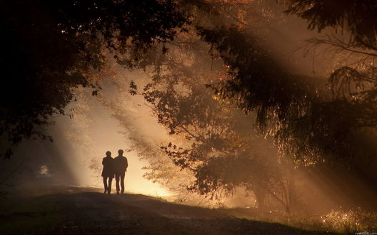 двое в темном лесу