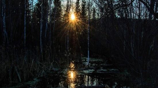 Случай на болоте 2