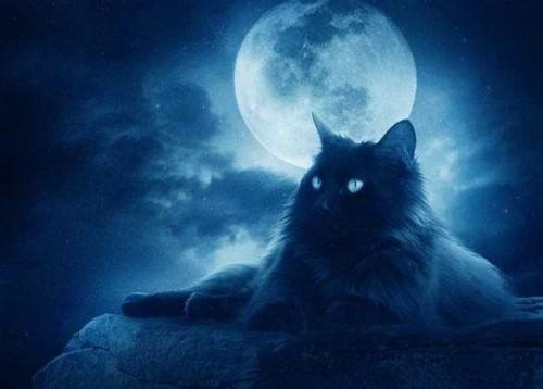 Магия кошек