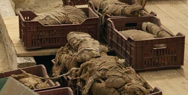 Найденные кошачьи мумии
