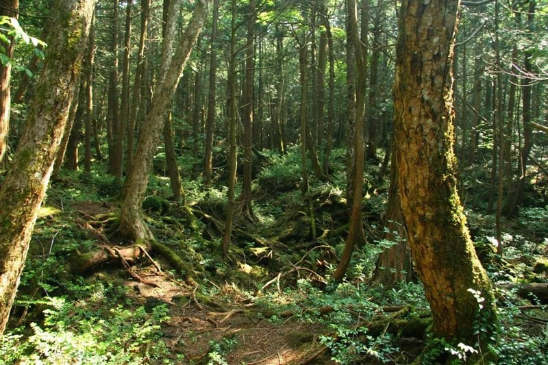 Лес самоубийц фото