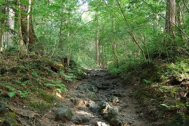 Лес Самоубийц в Японии
